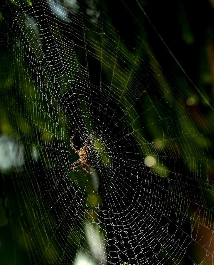 Spider Web 2 by Idda Purwaningtiyas - Nature Up Close Webs