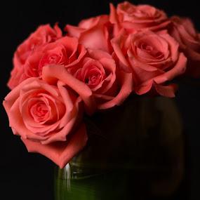 Valentine Pink Roses by Raymond Umlas - Flowers Flower Arangements ( roses, pink, flowers, valentine )