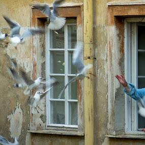 ... symbiosis ... by Roberto Nencini - People Street & Candids