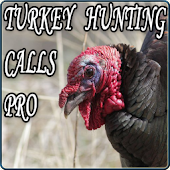 Turkey Hunting Calls