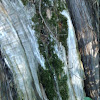 Moss on juniper tree trunk