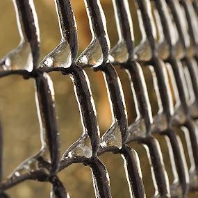 frozen fence by Dragutin Vrbanec - Artistic Objects Still Life