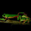 Monkey-frog