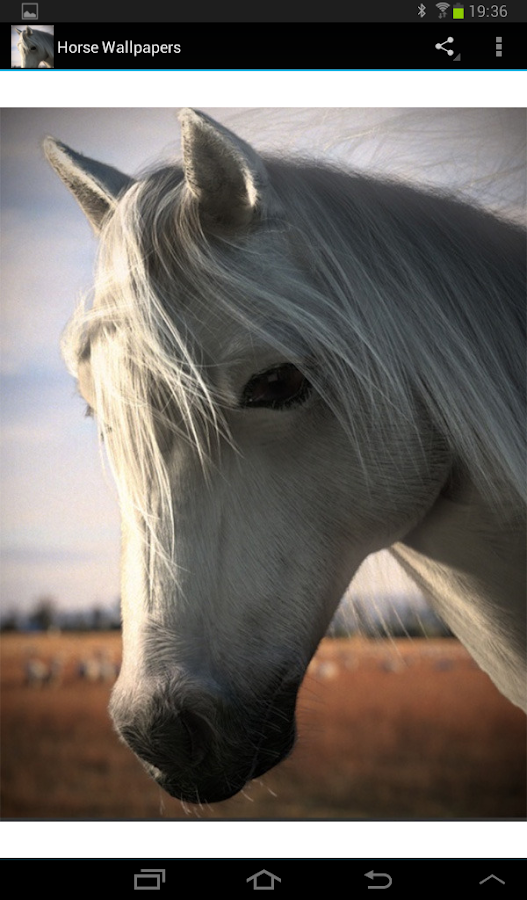 Free Horse Wallpapers HD - screenshot