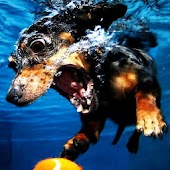 Dog under water wallpaper