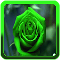 Best Flowers Live Wallpapers icon