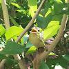 swallow tail bird