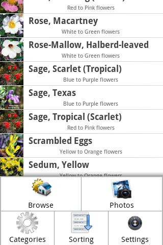 Wildflowers of East Texas - screenshot