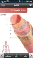 Screenshot of Anatomy & Physiology Cards