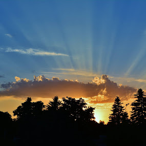 This is the sunset that closed our day at the Zoo. by Darrin Halstead - Landscapes Sunsets & Sunrises (  )