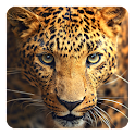 Wild animals Live Wallpaper icon