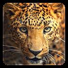 野生动物动态壁纸 icon