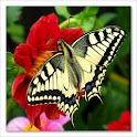 Butterflies! logo