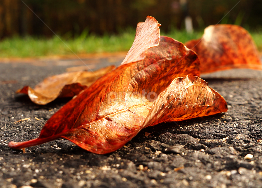 Fall 2014 by Vladislav Stakev - Nature Up Close Leaves & Grasses ( fall leaves on ground, nature, colorful, color, fall )