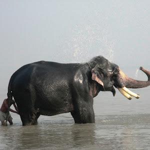 elephant (170).JPG