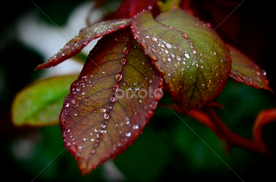 by Craig Luchin - Nature Up Close Leaves & Grasses (  )