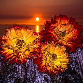 Summer setting by Blanca Braun - Landscapes Sunsets & Sunrises