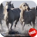 Horses video live wallpaper HD icon