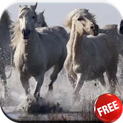 Horses video live wallpaper HD