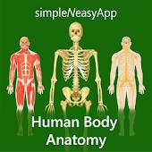 Human Body Anatomy by WAGmob