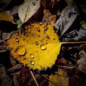 Autumn Dew Drops by Giovanna Arcadu - Instagram & Mobile iPhone (  )