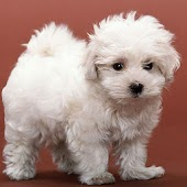 3D cute dog