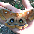 Nature of Piedmont Wildlife Center