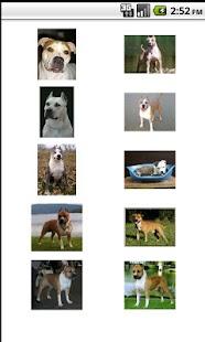 Perros.Todas las razas y fotos - screenshot thumbnail