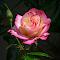 P_MG_0750.jpg