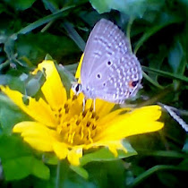 Butterflies and Moths of Kerala