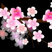 3D cute cherry blossom