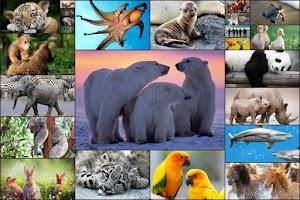 Screenshot of Animals Jigsaw Puzzles Kids