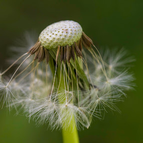 by Tracey Macnish - Nature Up Close Other plants ( socity6, facebook, show,  )