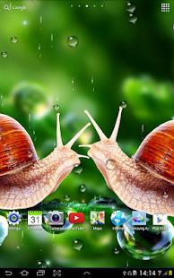 Rain Live Wallpaper 個人化 App-愛順發玩APP