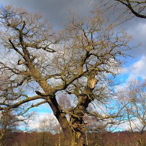 by Matt Gullick - Nature Up Close Trees & Bushes (  )