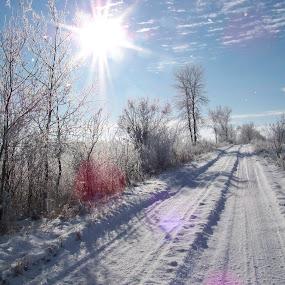 Frosty December by Carol Keskitalo - Landscapes Weather ( winter, snow, frost, landscape,  )