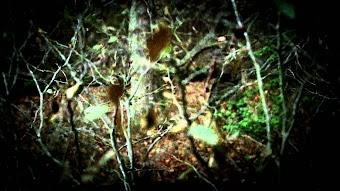 Sykesville Monster, Lechuza, The Rake