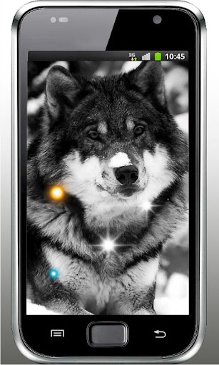 Wolf Black White livewallpaper