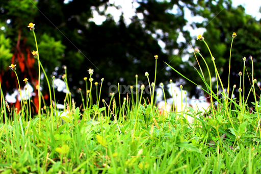 Small but Strong | Other plants | Nature Up Close | Pixoto