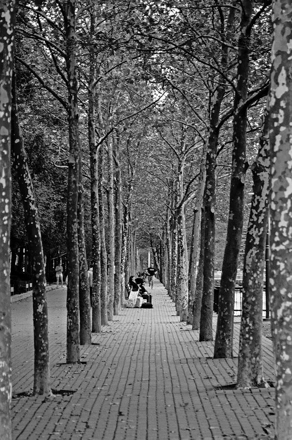 by Jose De La Cruz - Landscapes Forests (  )
