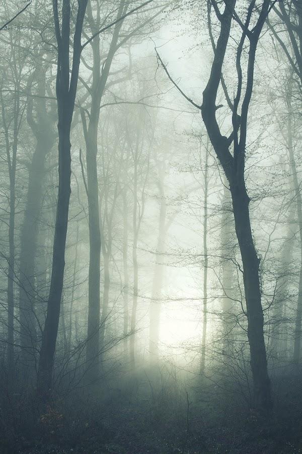 Trees Sun & Fog by Steve Struttmann - Landscapes Forests ( canon, struttmann, 2014, green, white, yellow, morning, 5dmkiii, 5d, sun, rays, luxembourg, steve, fog, trees, spictures )