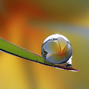 :: Yellow Flower Reflection :: by Dedy Haryanto - Nature Up Close Natural Waterdrops (  )