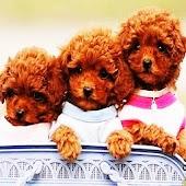 3D cute dog 30