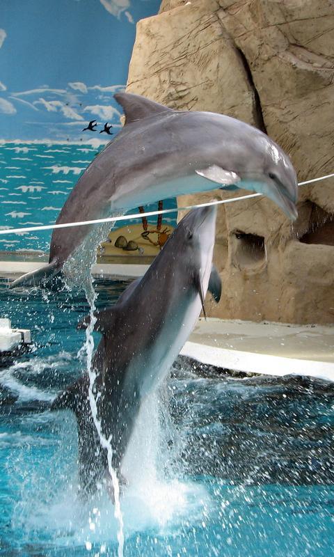 جميلة الدلافين اللغز! لعبة- screenshot