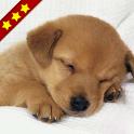 人気の犬アプリまとめ icon