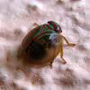 Round Issid Bug