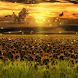 Sunset Sunflowers L. Wallpaper