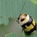 Ladybird~