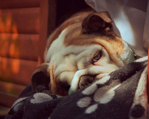 生活必備免費app推薦|可愛的小狗壁紙線上免付費app下載|3C達人阿輝的APP