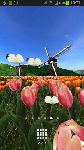 Tulip Fields 360°Trial